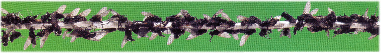 Fluerne sidder i lag på TDJ Fly-Stop
